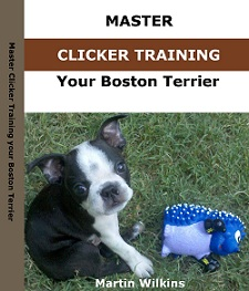 master clicker training your boston terrier